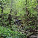 Potok w nieistniejącej już dzisiaj wsi Wilsznia