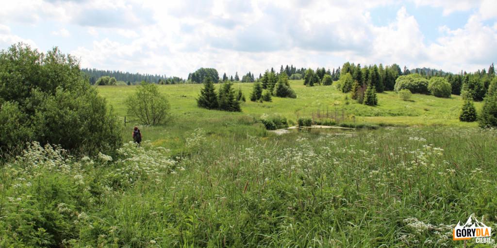 Dzikie łąki w Beniowej