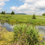 Rozlewiska i łąki w Beniowej
