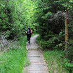 Ścieżka do pozostałości dworu Stroińskich