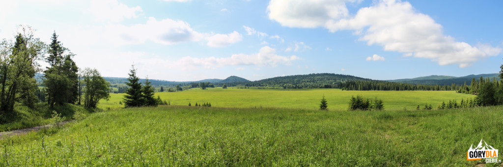 Dzikie łąki wBeniowej