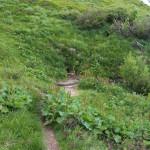 Źródełko nad Przełęczą GOPRowską (1160 m)