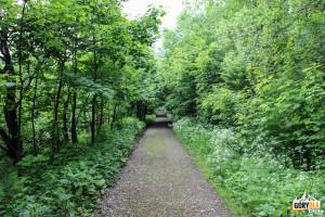Droga z Przełęczy Bukowskiej do Wołosatego