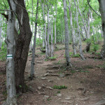 Zielony szlak na Połoninę Caryńską z Przełęczy Wyżniańskiej