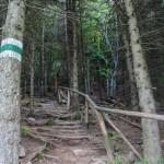 Drewniane balustrady i stopnie przy podejściu na Połoninę Caryńską z Przełęczy Wyżniańskiej
