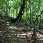 Drewniane balustrady i stopnie (czerwony szlak)