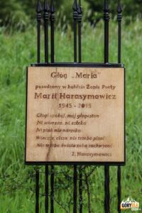 """Głóg """"Maria"""" posadzony w hołdzie Marii Harasymowicz, żony Poety"""