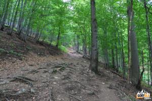 Zielony Szlak na Małą Rawkę