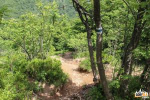 Zejście z Wielkiej Rawki niebieskim szlakiem do Ustrzyk Górnych