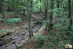 Potok przy niebieskim szlaku z Wielkiej Rawki do Ustrzyk Górnych