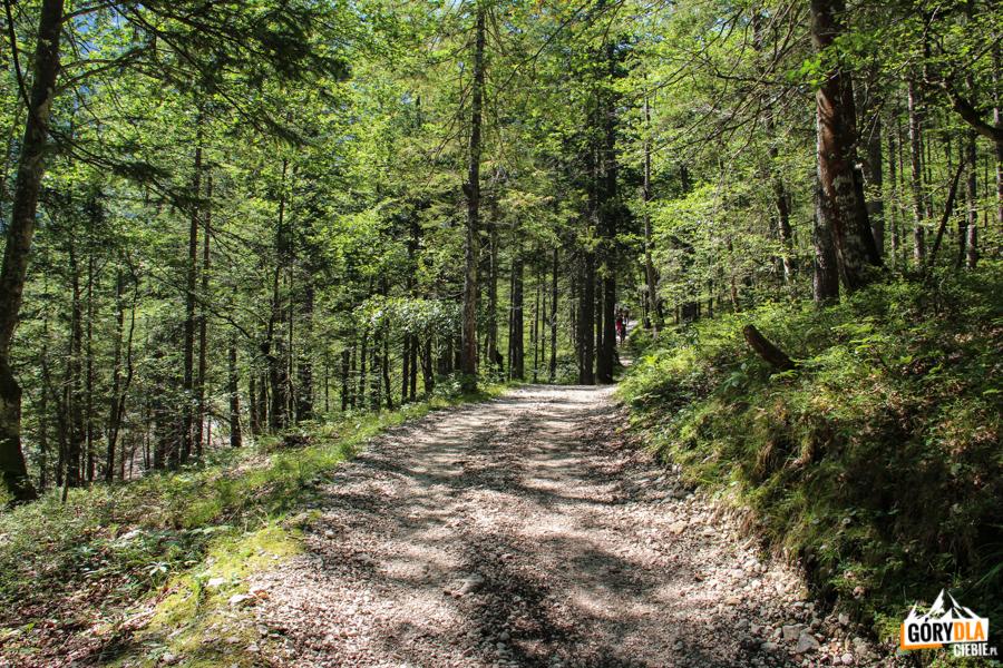 Początek szlaku na Triglav - wyjście z parkingu Pri lesi