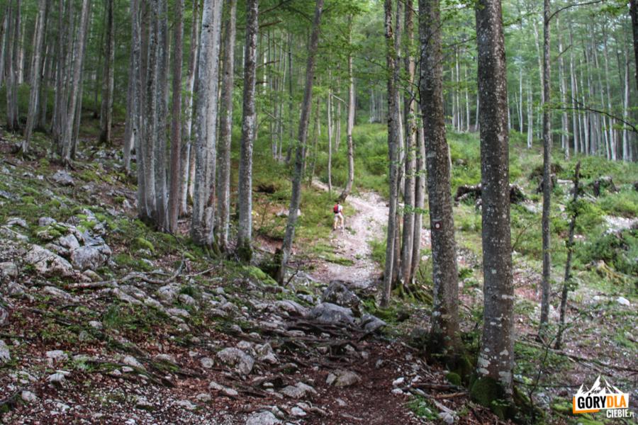 "Ścieżka pod ferratę ""Tominškova pot"""