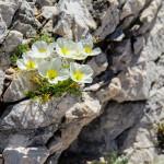 Kwiaty na wypalonej słońcem skale