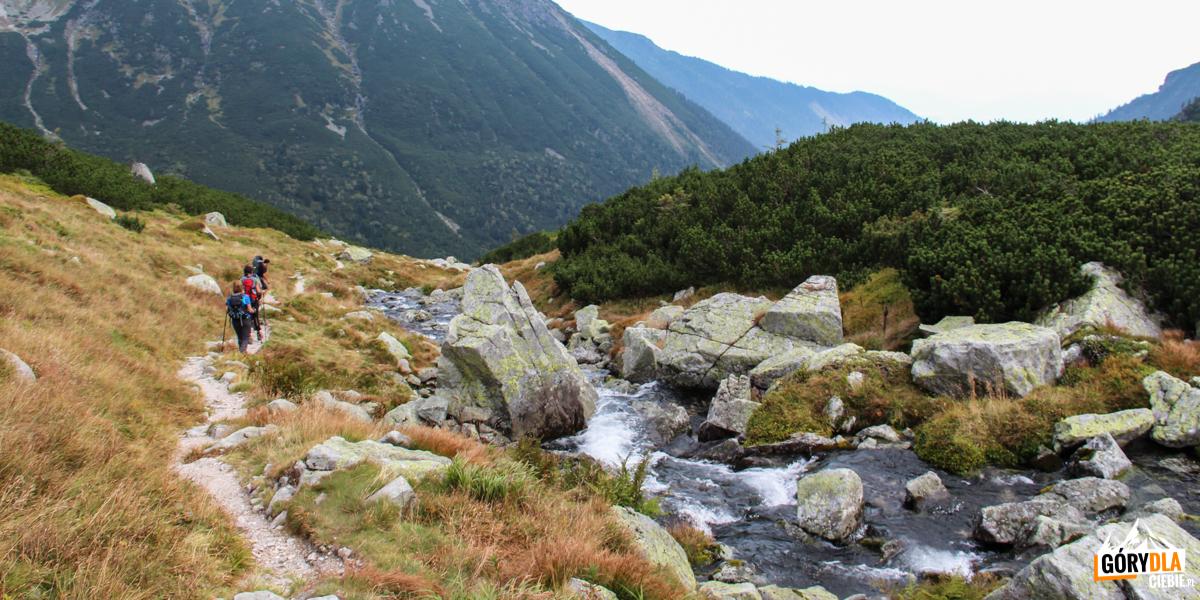 Żółty szlak biegnie wzdłuż Raczkowego Potoku