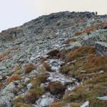 Wejście granią na szczyt Pachoła (2167 m)