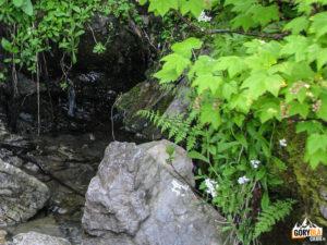 Żródełko na zboczu Skoruśniaka