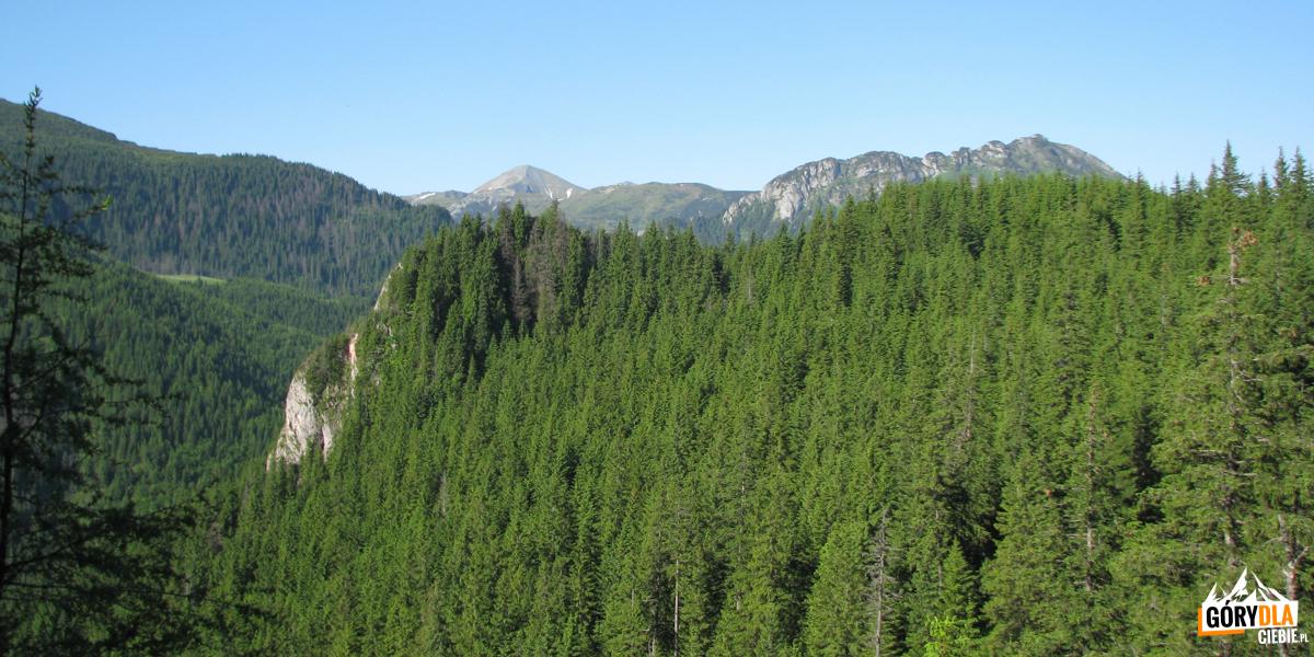 Widok zWyżniego Stanikowego Siodła (1271 m) naStarorobociański Wierch (2176 m) iKominiarski Wierch (1829 m)