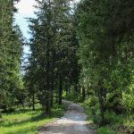 """Czarny szlak """"Drogi pod Reglami"""" z Kir w kierunku Nędzówki"""