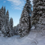 Bajkowa ścieżka w Dolinie Małej Łąki