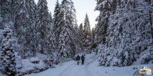 Droga w dół Doliny Małej Łąki