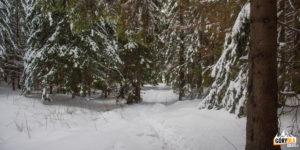 Zejście z Przełęczy w Grzybowcu do Doliny Małej Łąki