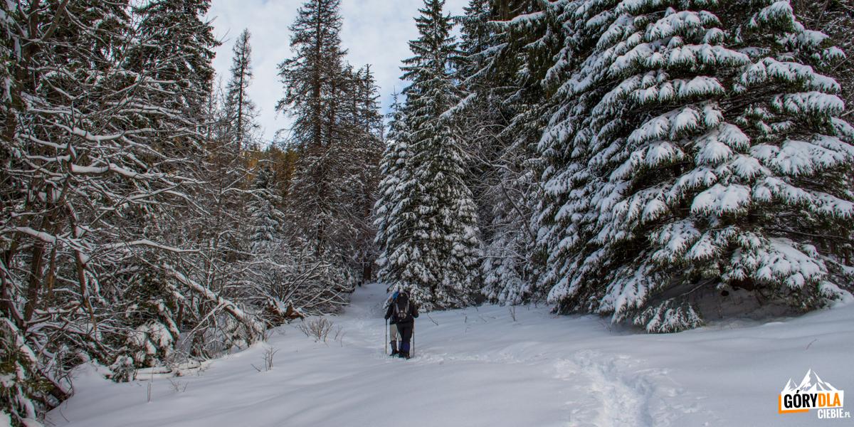 Zajście do Doliny Małęj Łąki poniżej Małej Polanki