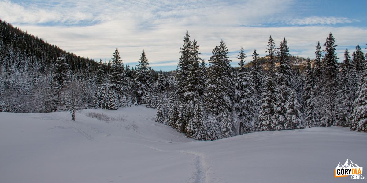 Zajście przez Rówienki do Doliny Małęj Łąki poniżej Małej Polanki