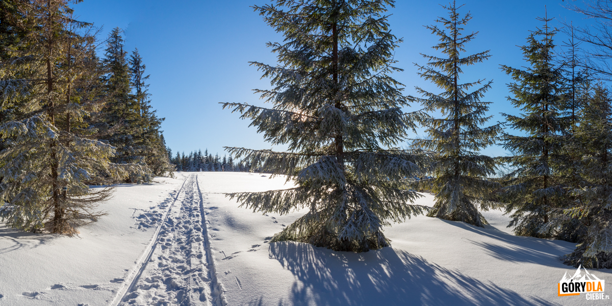 Wejście na polanę szczytowa Jałowca (1111 m)