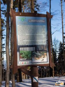 Droga z Jałowca (1111 m) na Przełęcz Opaczne - niebieski szlak schodzi do Zawoi Wełcza