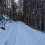 Droga rowerowa trawersując zbocza Jałowca od Siwcówki do Stryszawy Roztoki