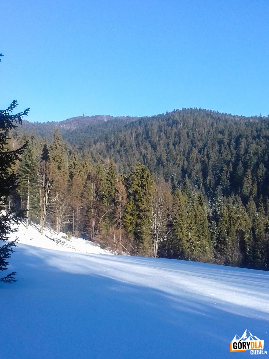 Podejście niebieskim szlakiem z Przełęczy Snozka na Lubań