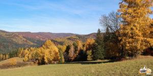 Lasy nad Wierchomlą w jesiennych kolorach.