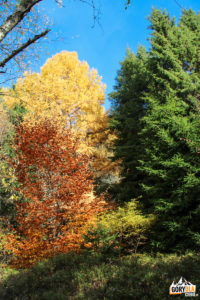 Kolorowe drzewa przed szczytem Pustej Wielkiej (1061 m)