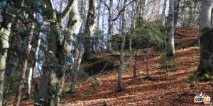 Wychodnia skalna na Jaworzynce (1001 m)