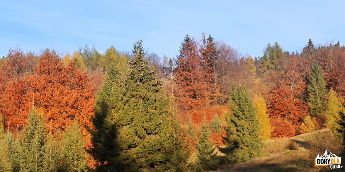 Bacówka nad Wierchomlą ukryta wśród kolorowych jesiennych drzew