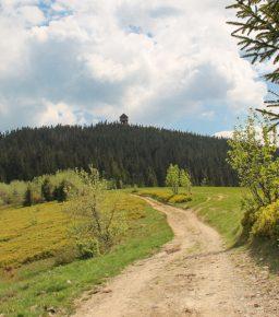 Widok z Gorca Kamienickiego na szczyt Gorca (1228 m)