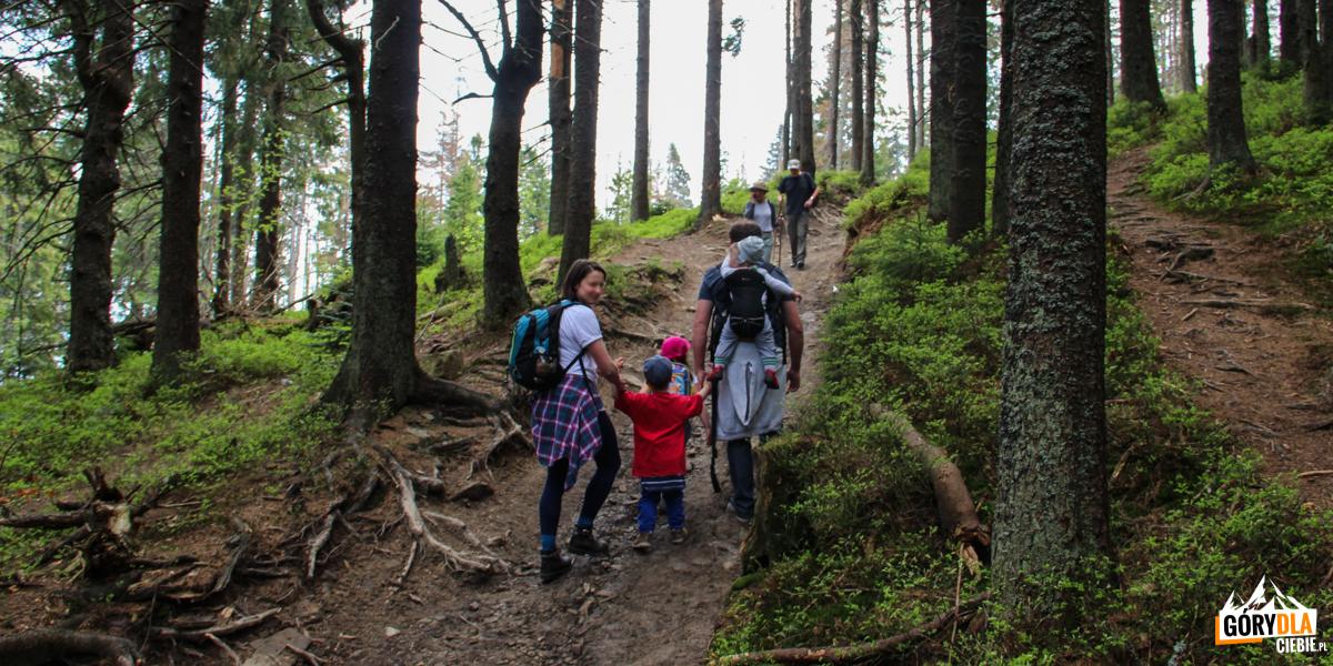 Na niebieskim szlaku podsamym szczytem Gorca (1228 m)