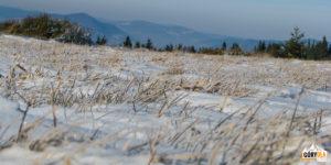 Zamarznięte trawy na polanie Gorc Kamienicki