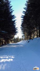 Niebieski szlak na Gorc (1228 m) - stokówka przez Nową Polaną