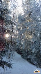 Zimą na niebieskim szlaku na Gorc (1228 m)