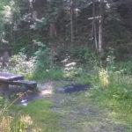 Żółty szlak z Korbielowa na Halę Miziową - oznakowane miejsce odpoczynku