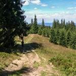 Zielony szlak z Hali Miziowej do Sopotni, koło Hali Górowej