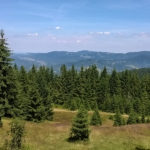 Widok z zielonego szlaku z Hali Miziowej do Sopotni, koło Hali Górowej