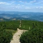 Ścieżka przez kosówki na Górę Pięciu Kopców (1542 m)