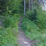 Żółty szlak z Korbielowa na Halę Miziową
