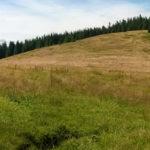 Hala Jodłowcowa na trasie zielonego szlaku z Hali Miziowej