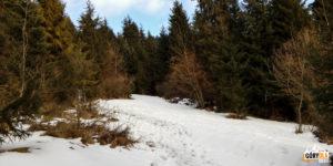 Zejśćie z Kosarzysk zielonym szlakiem do Sromowiec Niżnych