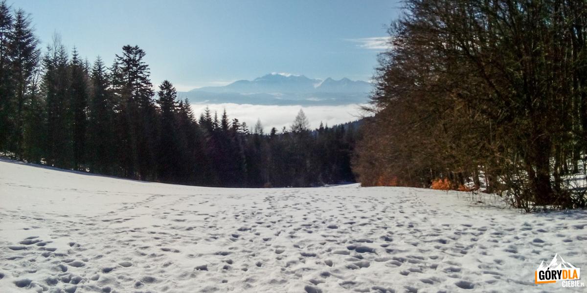 Panorama Tatr zPrzełęczy Szopka (780 m)