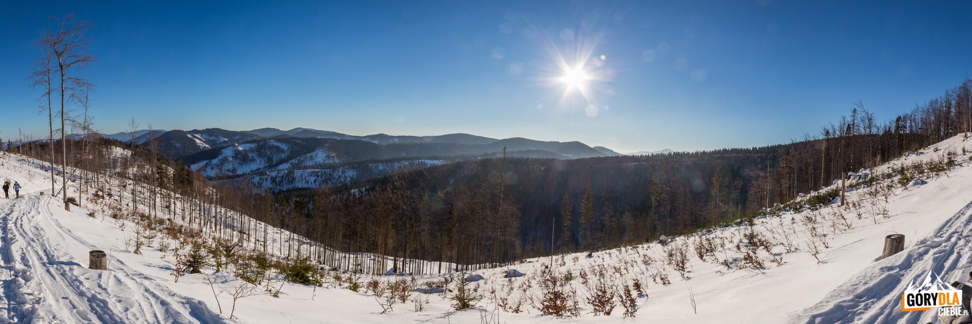 Widoki z żółtego szlaku na Wielką Raczę (1236 m) w kierunku Rycerzowej Wielkiej (1226 m)