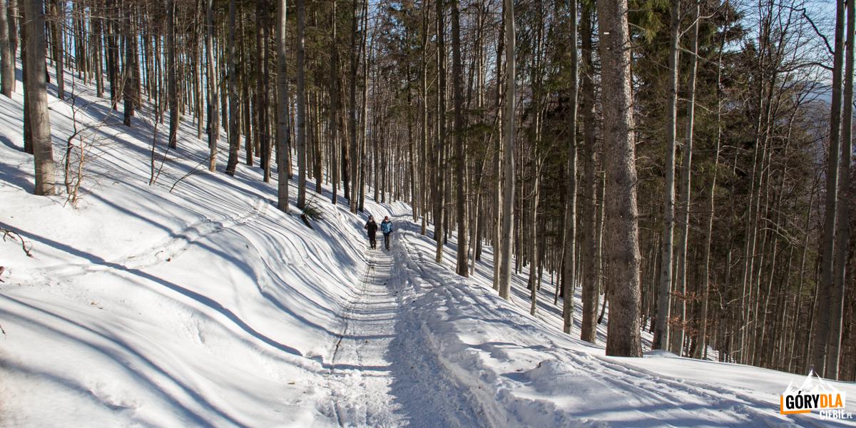 Żólty szlak naWielką Raczę (1236 m)